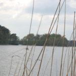 Widok na Wyspę Zamkową na J. Góreckim