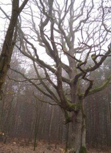 wyznaczanie kierunków świata drzewo 2