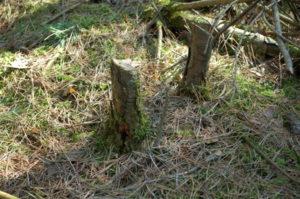 drewno na ognisko na rozpałkę